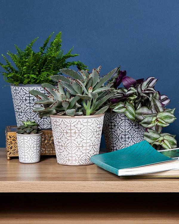Miles Plants