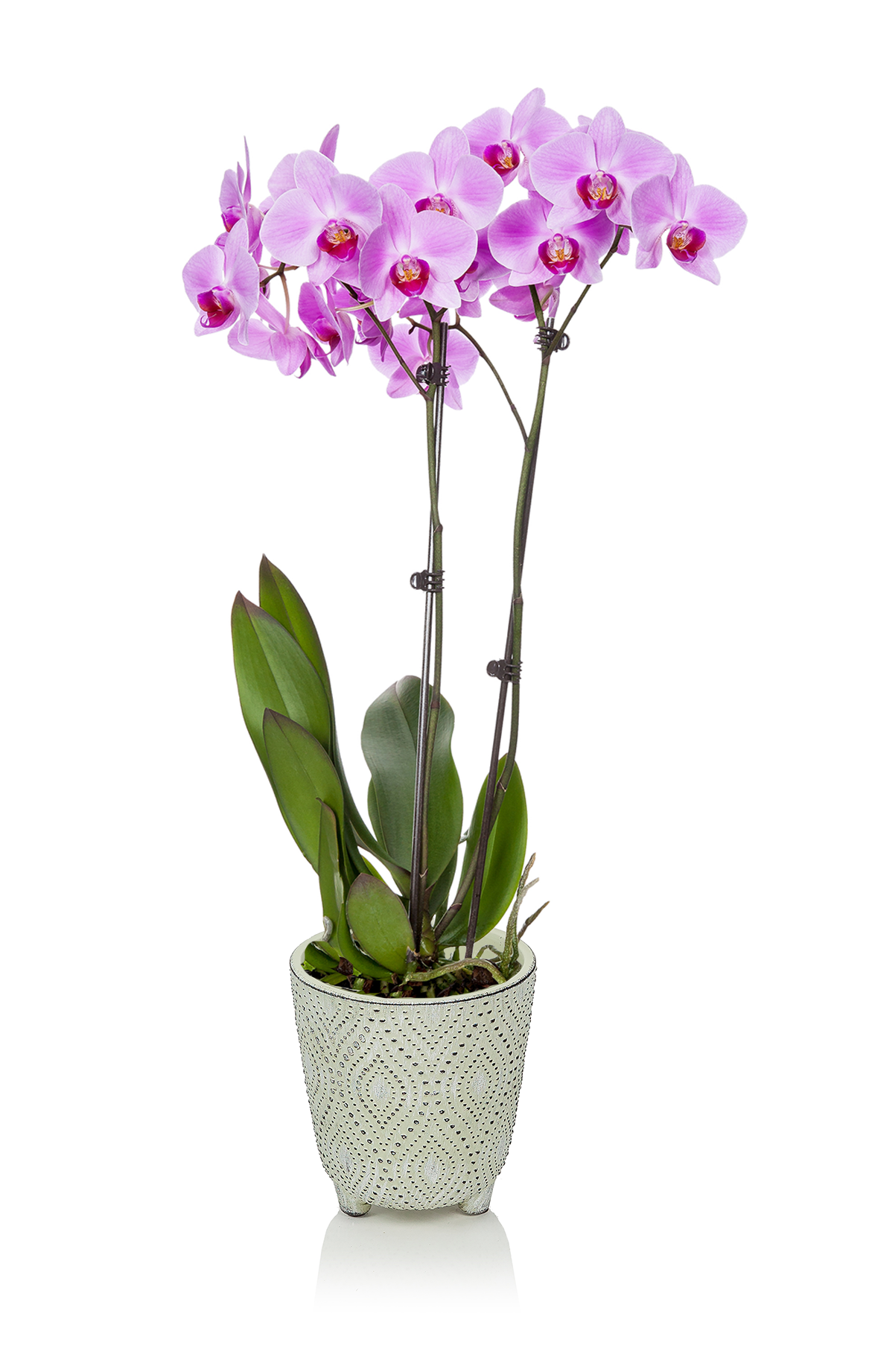 Max 5in_Orchid Everyday