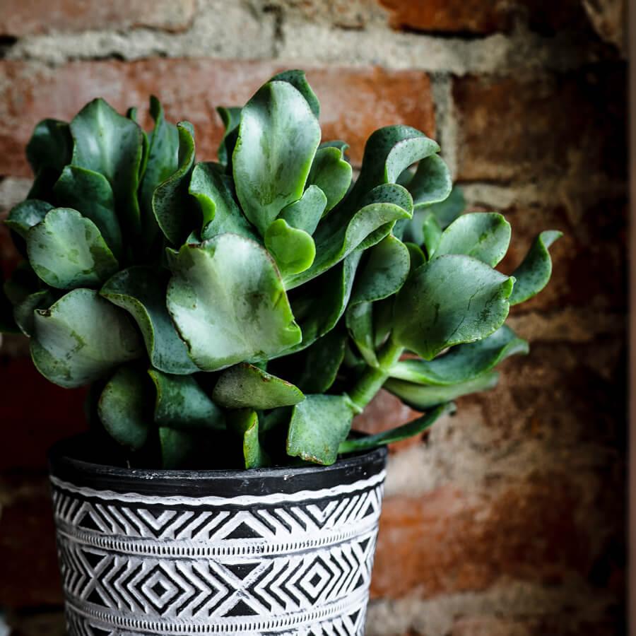 Care-Succulents