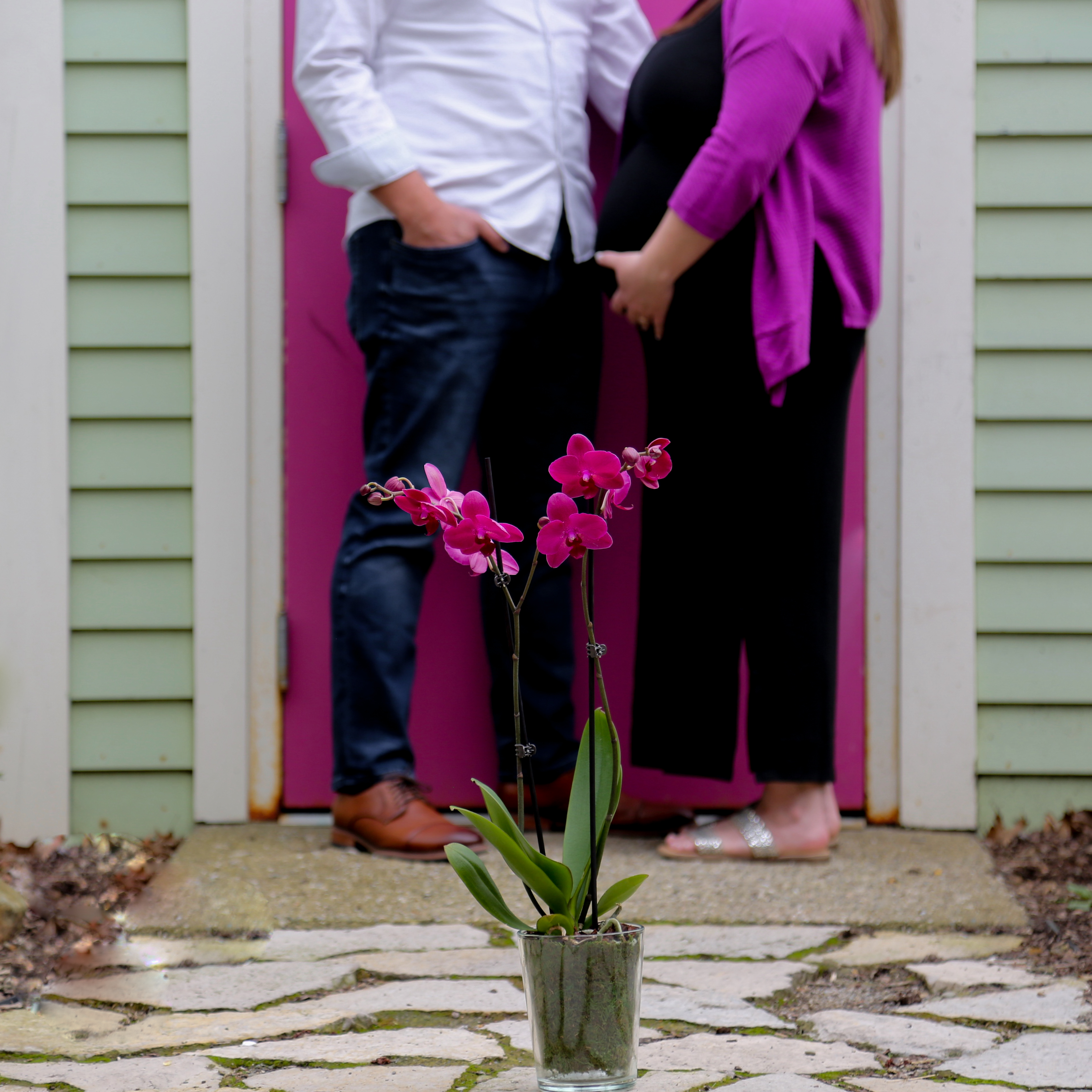Orchids are great mother's day flowers for expectant moms!