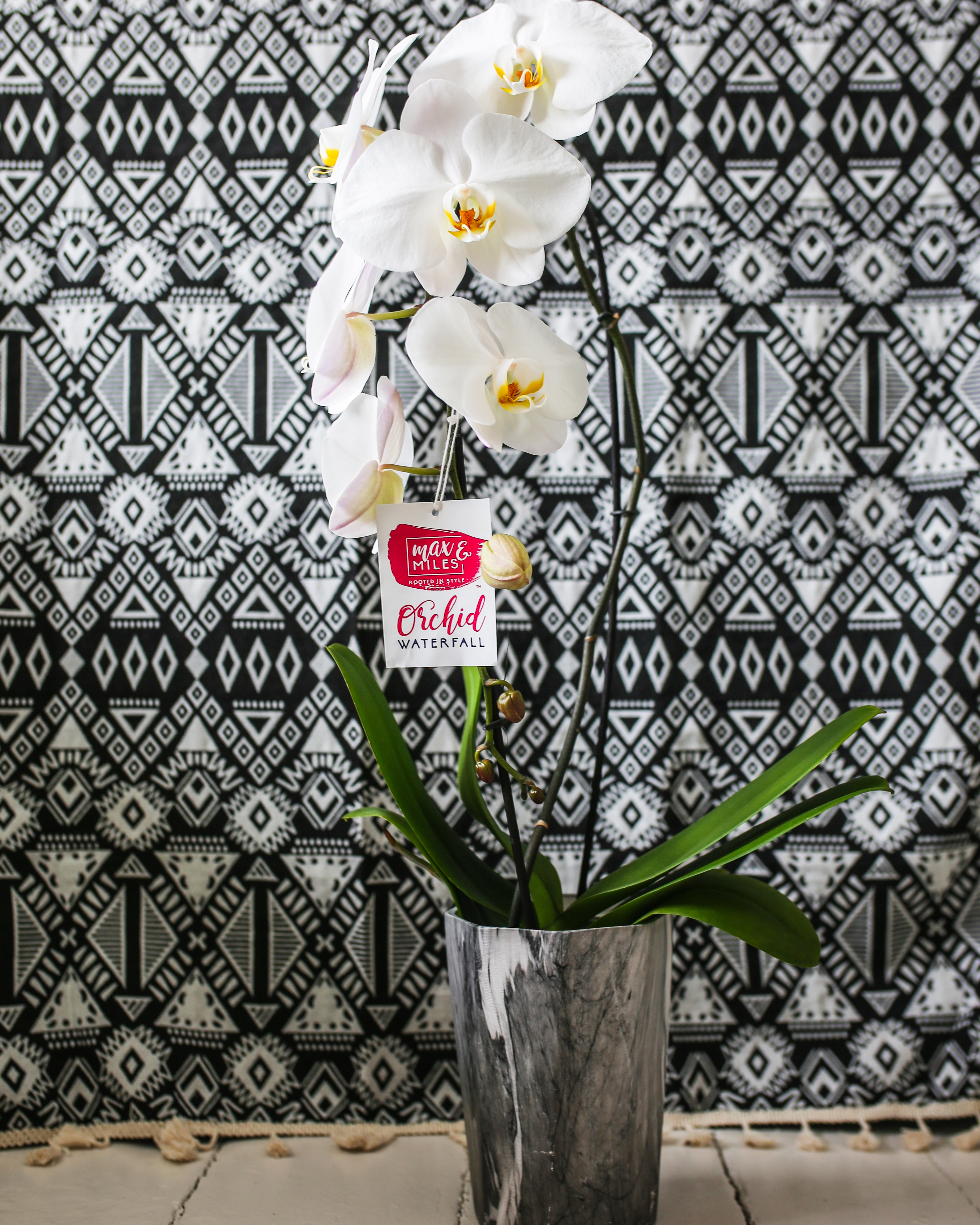 Waterfall Orchids for Plant Moms