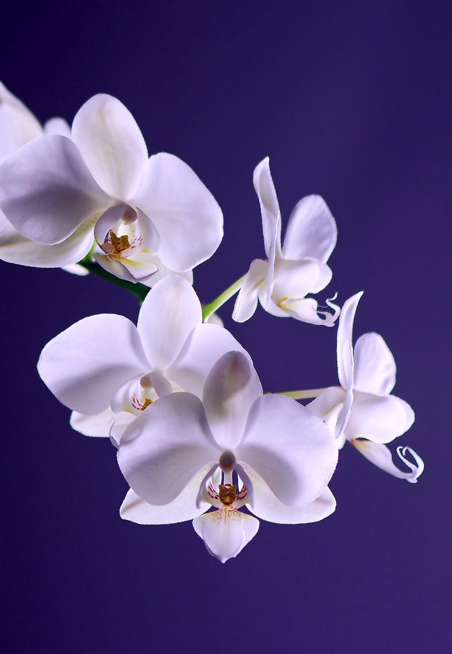 orchid-flower-plant-exotic-40744